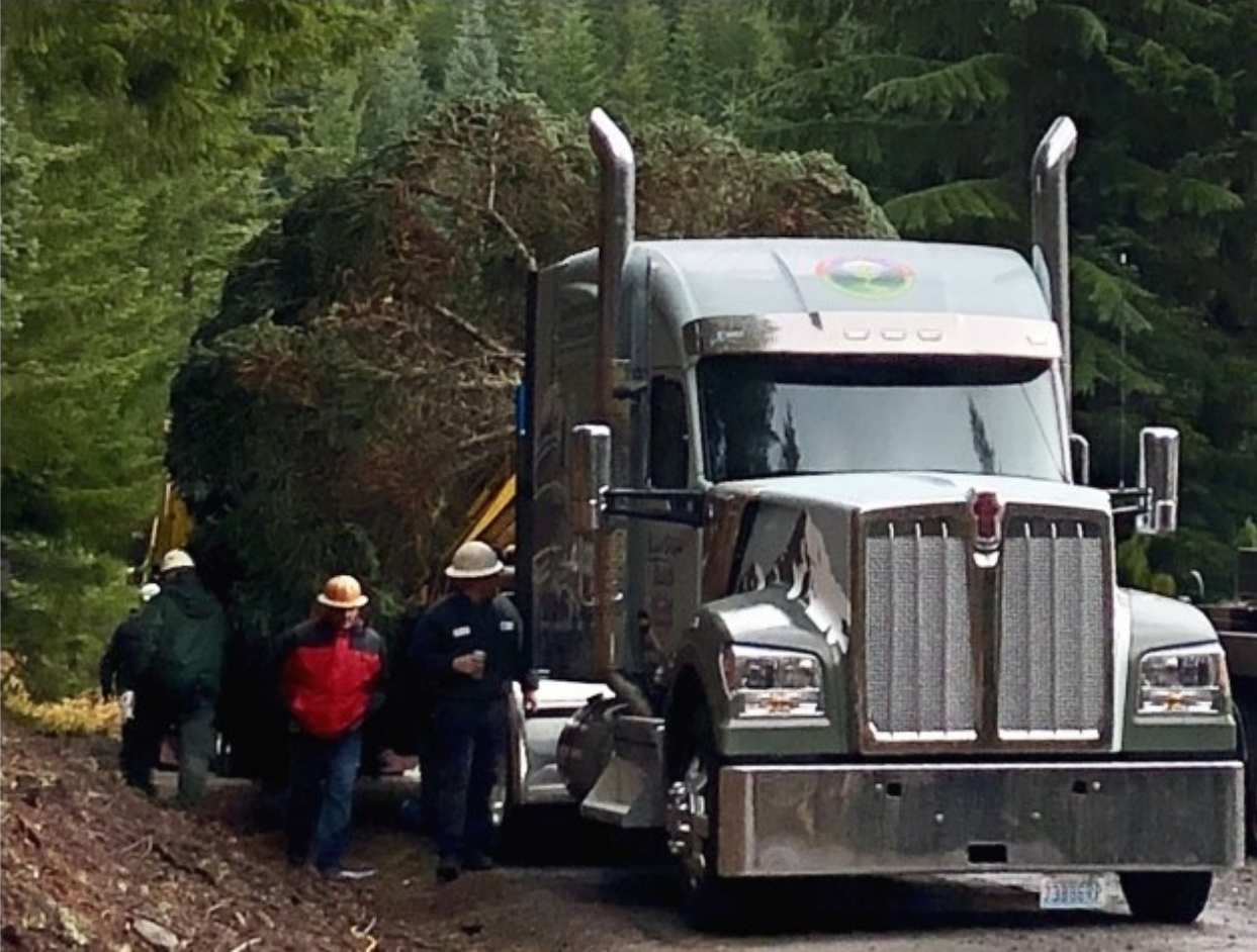 See Capitol Christmas Tree Begin Its Journey With The Kenworth W990